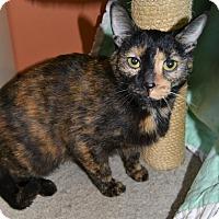 Adopt A Pet :: Iggy - Michigan City, IN