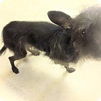 Adopt A Pet :: Gentry - Tavares, FL