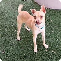 Adopt A Pet :: Truman - Bonney Lake, WA
