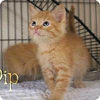Adopt A Pet :: Pip - Benton, LA