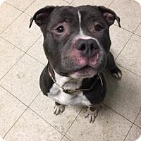 Adopt A Pet :: Lucky - Cleveland, OH