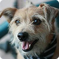 Adopt A Pet :: Tim - Canoga Park, CA