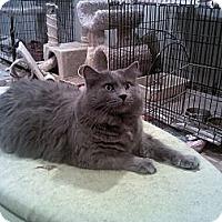 Adopt A Pet :: Zander - Muncie, IN