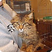 Adopt A Pet :: Fritz - Heber Springs, AR