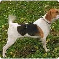 Adopt A Pet :: Gunther - Richmond, VA