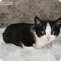 Adopt A Pet :: Cash - Eagan, MN
