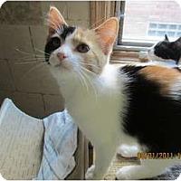 Adopt A Pet :: Ethel - Sterling Hgts, MI