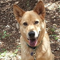 Australian Cattle Dog Mix Dog for adoption in Lago Vista, Texas - Sandy