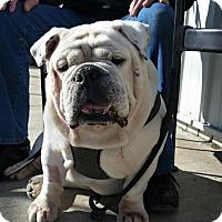 Adopt A Pet :: Ferguson - Park Ridge, IL