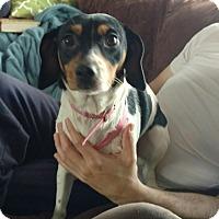 Adopt A Pet :: Nilla - Plainfield, IL