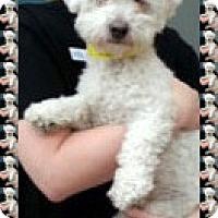 Adopt A Pet :: Pending!! Klondike - MI - Tulsa, OK