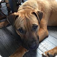 Adopt A Pet :: Bowser - Saskatoon, SK