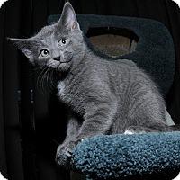 Adopt A Pet :: Flex - Mississauga, Ontario, ON