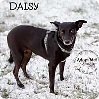 Adopt A Pet :: Daisy - La Crosse, WI