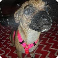 Adopt A Pet :: Simone - Gardena, CA