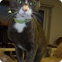 Adopt A Pet :: Samson - Hamburg, NY