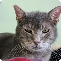 Adopt A Pet :: Beaky - Indianapolis, IN