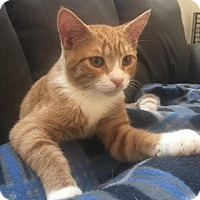 Adopt A Pet :: Tigger - Virginia Beach, VA