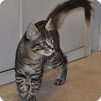 Adopt A Pet :: Bitsy - Tucson, AZ