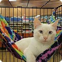 Adopt A Pet :: MOE - Powder Springs, GA