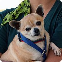 Adopt A Pet :: Ricky - Palmdale, CA