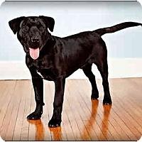 Adopt A Pet :: Jake - Owensboro, KY