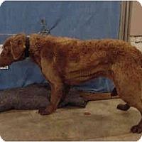 Adopt A Pet :: Curls/Pending - Zanesville, OH