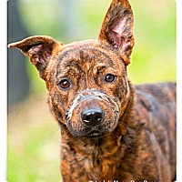 Adopt A Pet :: Kallie - Seattle, WA