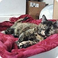 Adopt A Pet :: LilBit - Colorado Springs, CO