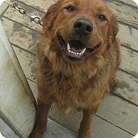 Adopt A Pet :: Max - Gig Harbor, WA