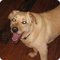 Adopt A Pet :: FERDINAND - Douglasville, GA
