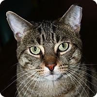 Adopt A Pet :: Scottie - North Branford, CT