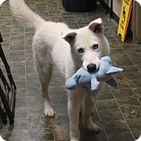 Adopt A Pet :: Athena - Rockwall, TX
