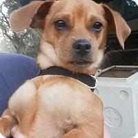 Adopt A Pet :: Neptune - Gainesville, FL