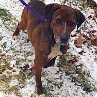 Adopt A Pet :: Riley - Metamora, IN