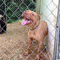 Adopt A Pet :: Reddington - Cookeville, TN