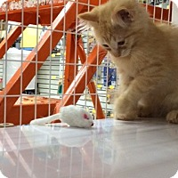 Adopt A Pet :: Jude - East Meadow, NY