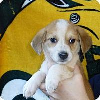 Adopt A Pet :: Cooper - Oviedo, FL