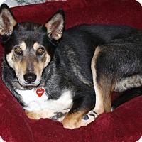 Adopt A Pet :: Gwendolyn - Calm companion - Los Angeles, CA