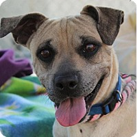 Adopt A Pet :: SADIE-Low fees/spayed - Red Bluff, CA