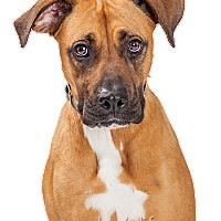 Adopt A Pet :: Reesa - Tempe, AZ