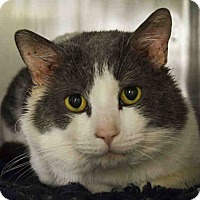Adopt A Pet :: Chunky - Newtown, CT