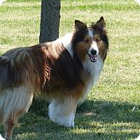 Adopt A Pet :: Oscar - Stony Brook, NY