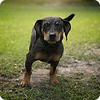 Adopt A Pet :: Nala - Daleville, AL