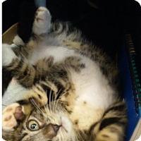 Adopt A Pet :: Sweetie - Whitestone, NY