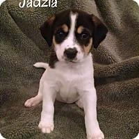 Adopt A Pet :: Jadzia - Knoxville, TN