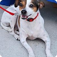 Adopt A Pet :: Lulu - Madison, AL