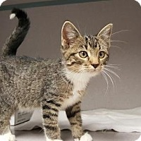 Adopt A Pet :: Laci - Knoxville, IA