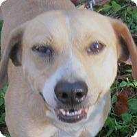 Adopt A Pet :: Bowser - Hillsboro, OH