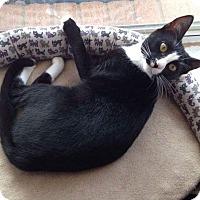 Adopt A Pet :: Charlotte - Arlington, TX